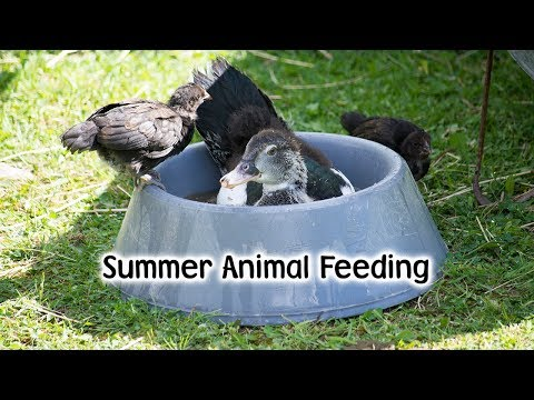 Summer Animal Feeding