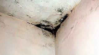 Грибок и плесень  на стенах | Как вывести | #edblack(Способов избавления от #грибков и #плесени существует несколько. Я Ed Black даю хороший совет, и предлагаю мале..., 2015-11-16T09:11:32.000Z)