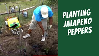 Backyard Garden: Planting Jalapeno Peppers