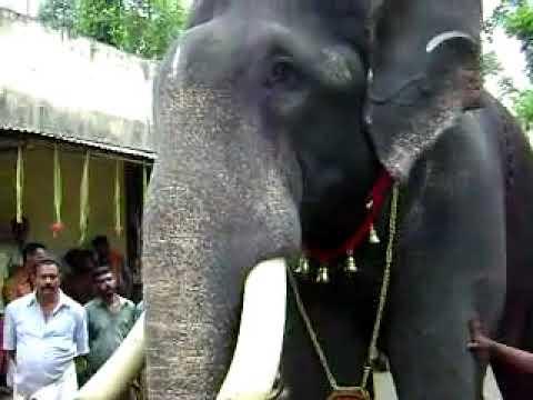 Huge Demand For Elephants In Kerala