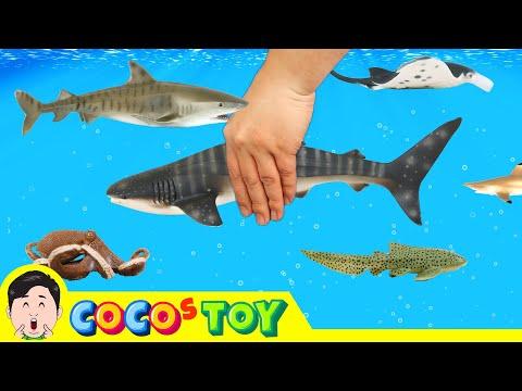 한국어ㅣ우리집 어항에 고래상어 키우기, 어린이 교육영상, 공룡 만화, 해양동물 이름 맞추기, 컬렉타, 53화ㅣ꼬꼬스토이