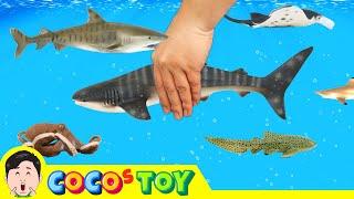 한국어ㅣ우리집 어항에 고래상어 키우기, 어린이 동물 만화, 해양동물 이름 맞추기, 컬렉타, 53화ㅣ꼬꼬스토이