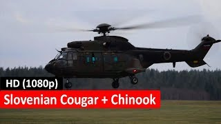 Slovenian Cougar and a American Chinook Spotted Together