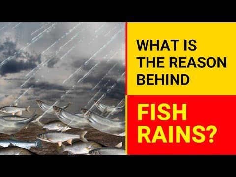 What Is The Reason Behind Fish Rains? | Why Fish Rain Occurs? | Fish Rain Down From The Sky
