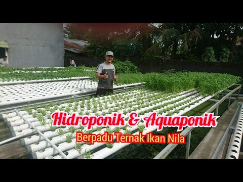 Pertanian Terpadu: Hidroponik Dan Aquaponik, Ternak Ikan Nila..