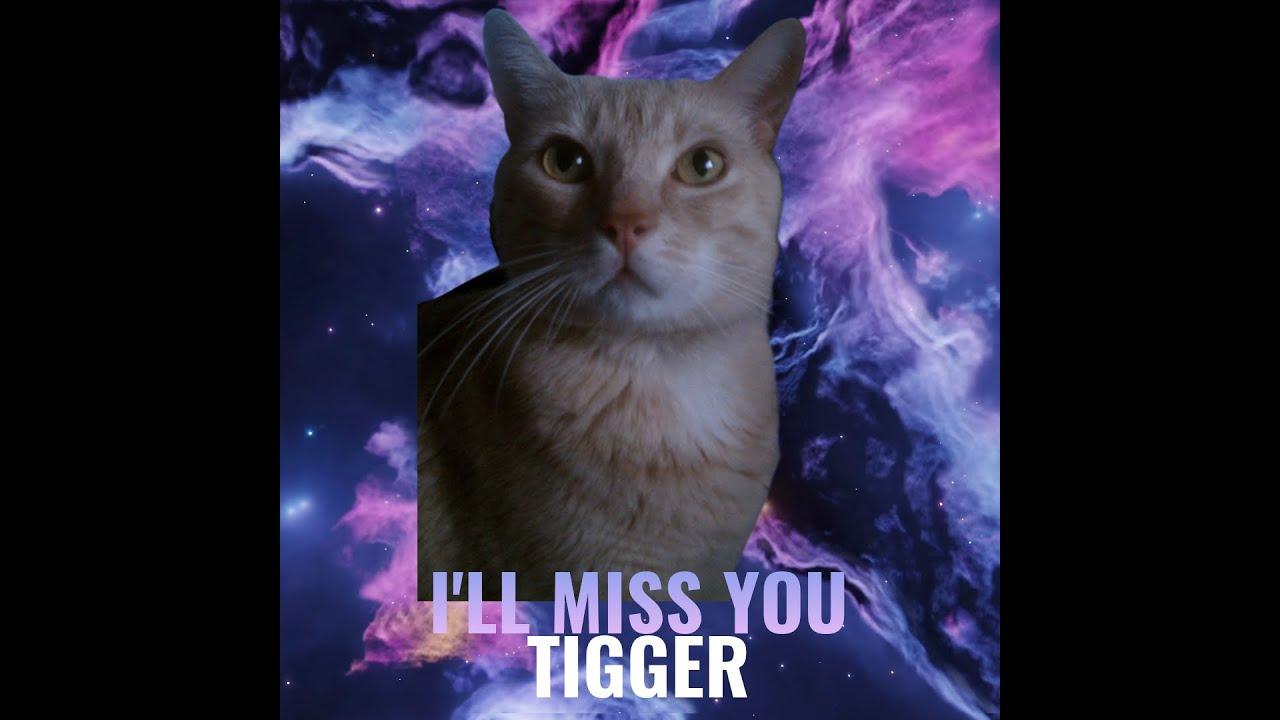 I Love You, Tigg