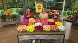 Roberta's 18-piece Hardy Succulent Flowering Ice Plants with Carolyn Gracie