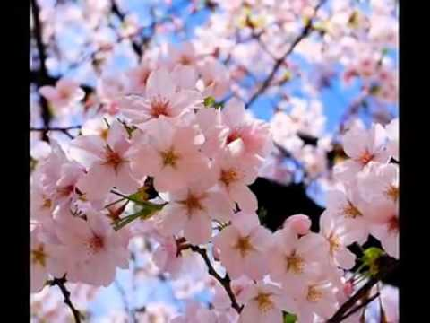 Chrisye   Sakura Dalam Pelukan