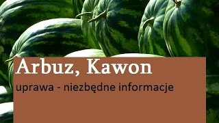 Arbuz, Kawon - uprawa