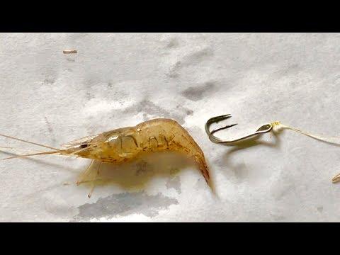 3 Ways To Hook Shrimp - Triple Hook - Double Hook And Hooks - DIY Fishing - 3 Cách Móc Tôm
