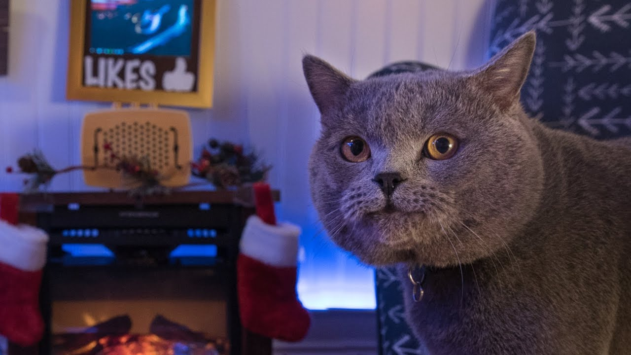 Interactive Cat Live Stream Behind the Scenes
