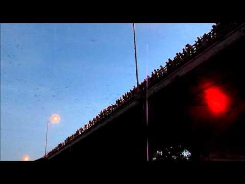 Bat Bridge in Austin