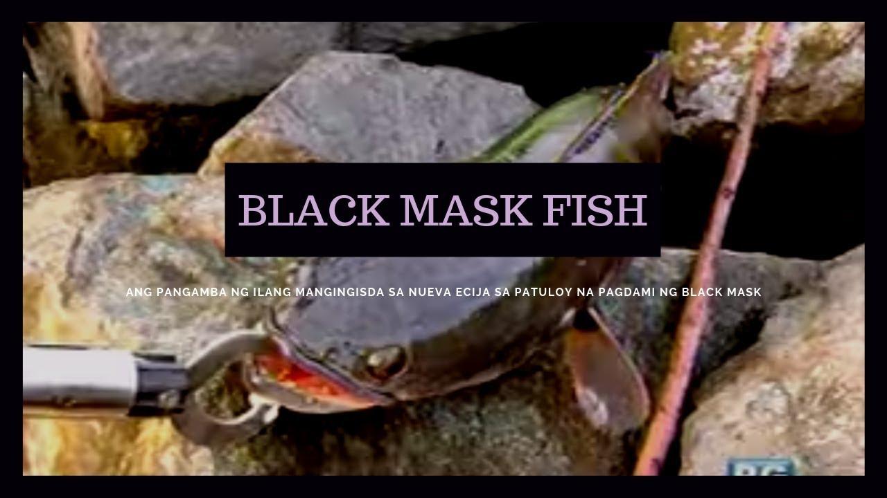 Isdang snakehead o 'black mask,' umuubos ng tilapia sa Pantabangan Dam | Born to Be Wild