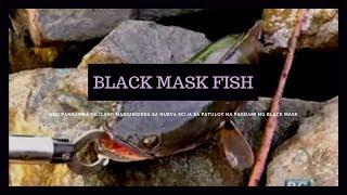 Isdang snakehead o 'black mask,' umuubos ng tilapia sa Pantabangan Dam