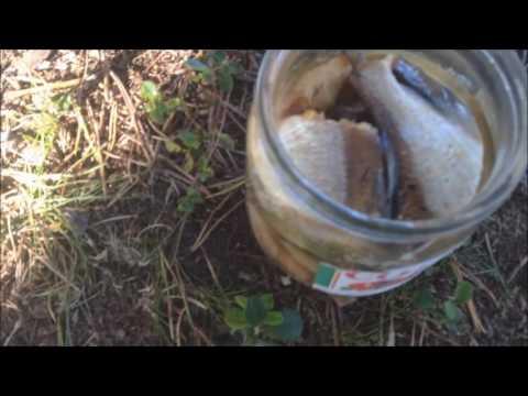 Рецепты котлет из речной рыбы, секреты выбора ингредиентов и