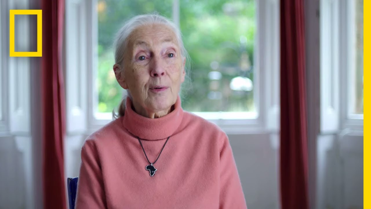 Jane Goodall: The Hope – Trailer | National Geographic