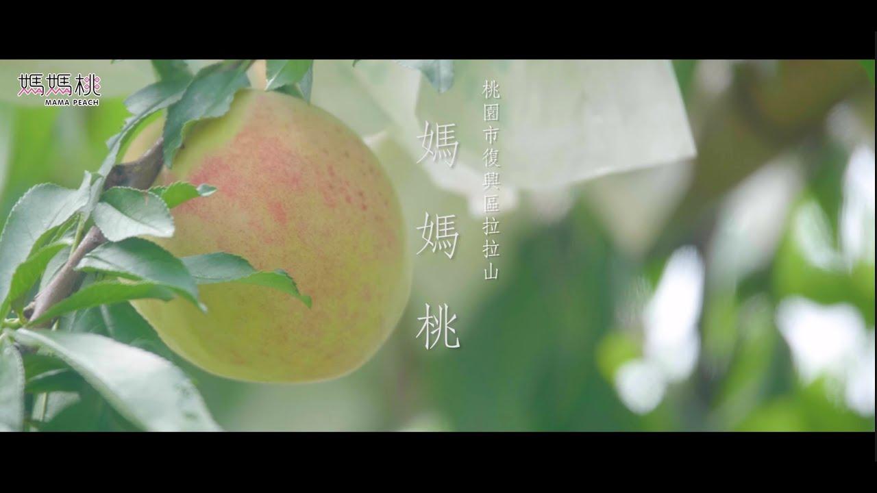 [桃園 復興]2021媽媽桃「愛的果實篇」 完整版 CF