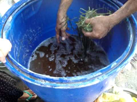 ipil ipil extract Suitability of azolla as a livestock feed 347% ether extract, 1576% ash and 3008% nitrogen free extract on the air-dry basis (basak et al, 2002) moringa oleifera, locally known as papaya, ipil-ipil and malunggay, respectively.