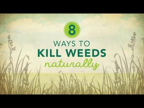 8 Ways To Kill Weeds Naturally