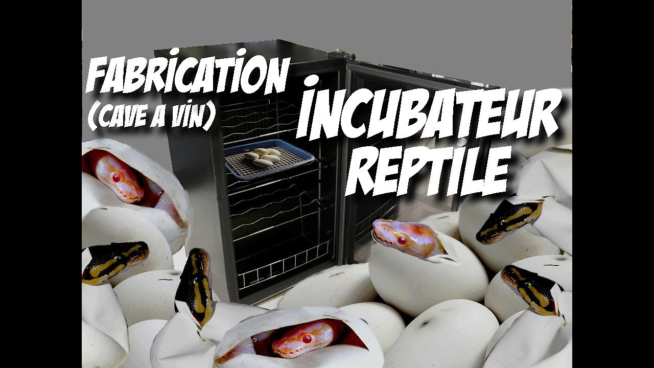 fabrication incubateur reptile cave vin youtube. Black Bedroom Furniture Sets. Home Design Ideas