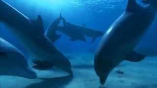 Schiller / Dolphindream