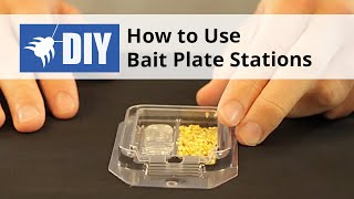 How to Use Bait Plate Stations for Ants & Roaches