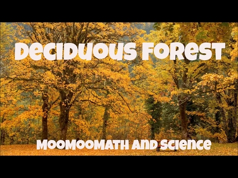 Temperate Deciduous Forest-World Biomes