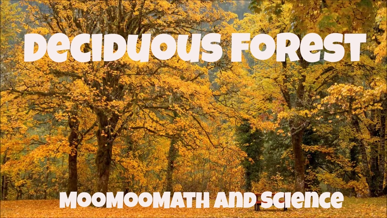 deciduous forests Deciduous forests or deciduous temperate forests are woodlands dominated by leafy trees further information and deciduous forest facts provided.