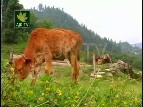 Azad Jammu & Kashmir AJK TV new Kashmiri Song