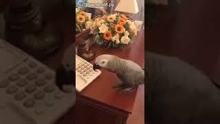 Дерзкий разговор попугая с хозяйкой