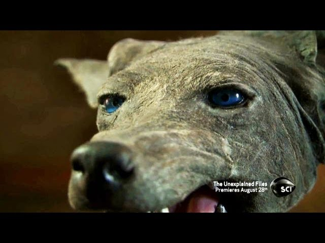 Texas Blue Dogs | The Unexplained Files