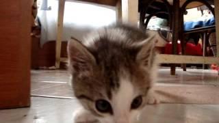 танец котенка