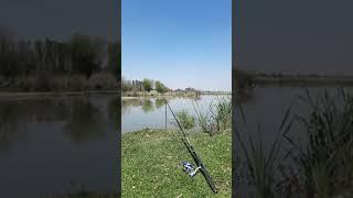 Красивая Природа На Рыбалке Приколы Fishing PRO Темур Тик Ток Shorts