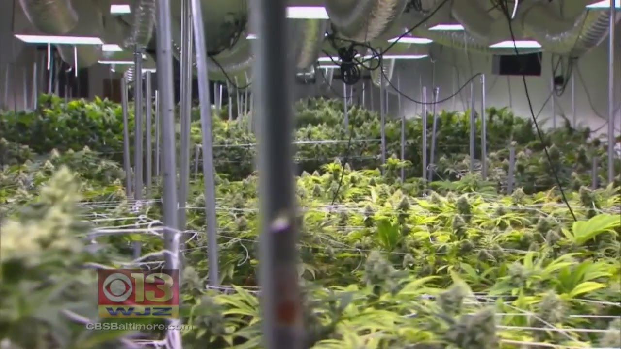 Maryland just got its first licensed grower of medical marijuana