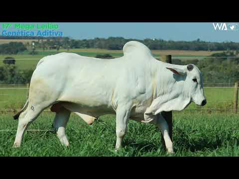 LOTE 136 - REM 2167 - 17º Mega Leilão Genética Aditiva 2020