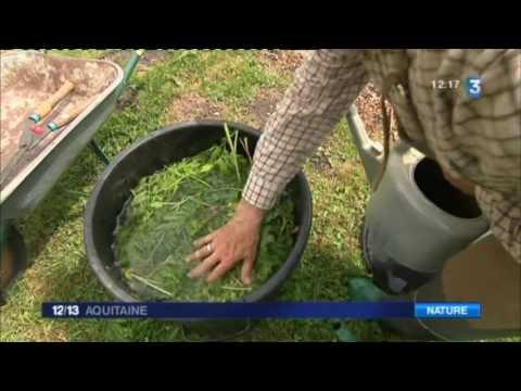 Les conseils de Bernard le jardinier :  Le purin de Tanaisie