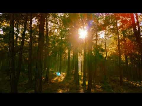 Nurefşan Özer-Zerdaliler(Ezginin Günlüğü)