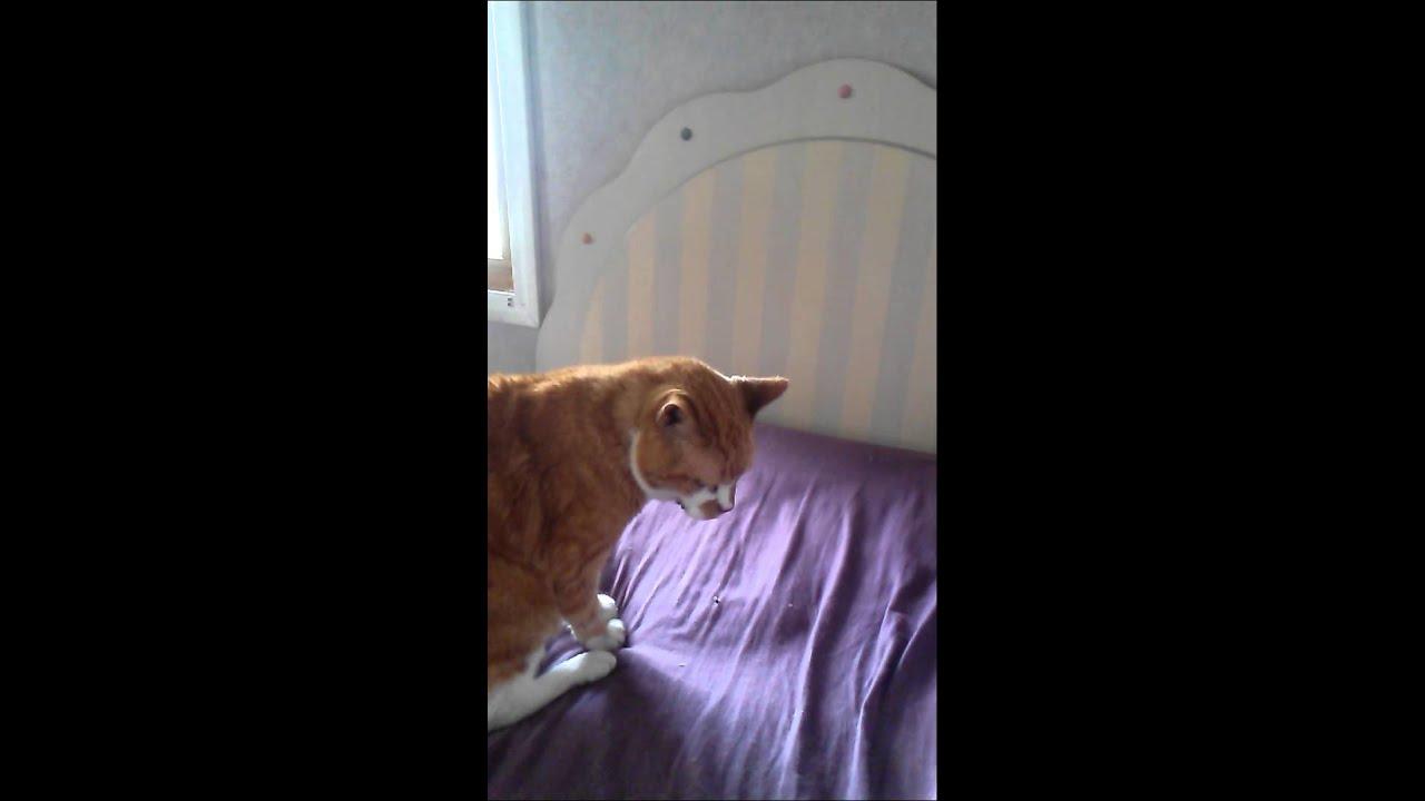 Cat Has Sneezing Fit