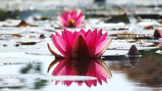 Leven in openheid als geheel | Anandajay
