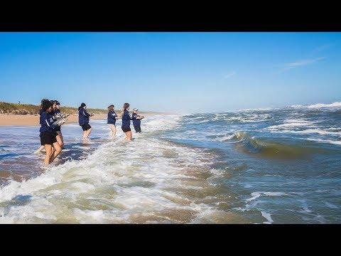 10 Endangered Sea Turtles Released on Florida's East Coast