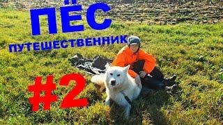 Пёс-путешественник. Маламут. Начало пути на Кавказ #2