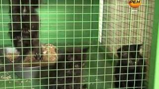 06.07.11 Приют для животных