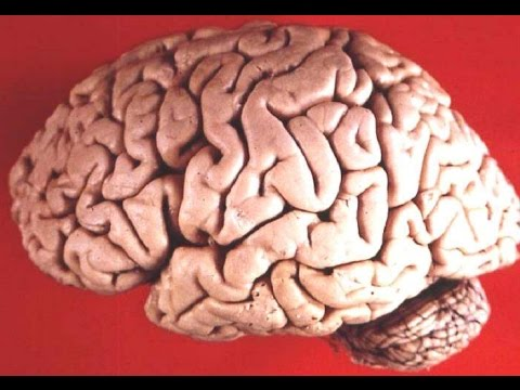 Our Mind is Not a Blank Slate: Evolutionary Psychologists Leda Cosmides & John Tooby