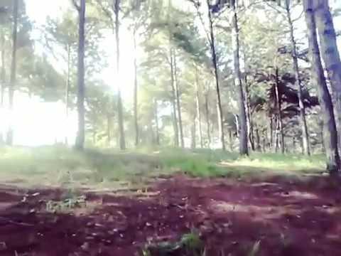 Bosque en Santo Domingo Oeste, RD