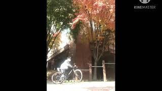 하이브리드 자전거 낙차모음