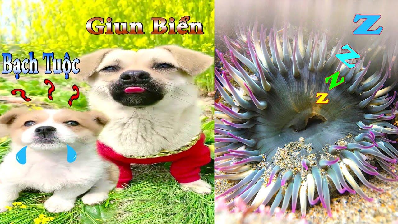Thú Cưng TV   Dương KC Pets   Bông ham ăn Bí Ngô Cute #45   chó vui nhộn   funny cute smart dog pets