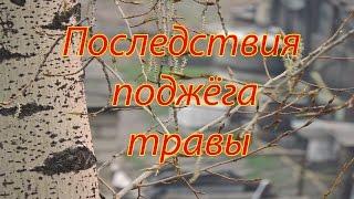 Последствия пожаров в Белогорске 8 мая 2016(Прошу вас ОДУМАТЬСЯ перед тем как что то сделать! В амурской области и почти по всей России начали поджигать..., 2016-05-08T14:18:17.000Z)