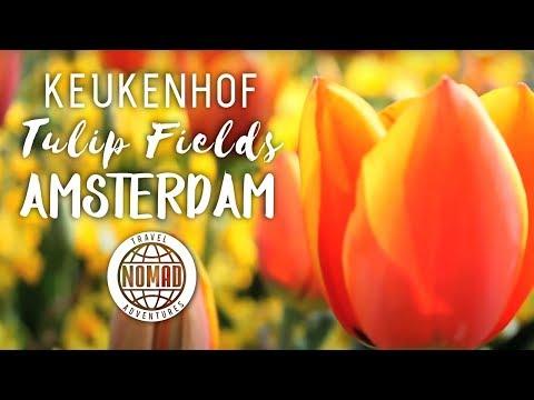 Keukenhof Tulip Fields from Amsterdam Netherlands