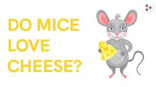 Do Mice Love Cheese?   Don't Memorise #Shorts