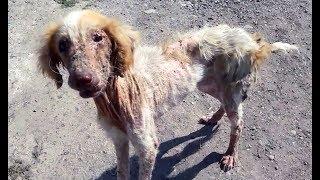 Con người cứu động vật | cứu hộ động vật # 16